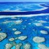"""Los arrecifes de coral al """"límite"""""""