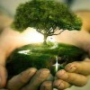 Crece interés por desarrollar bancos de compensación ambiental en Chile