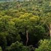 El planeta se adapta: Emisiones de CO2 han fomentado el crecimiento de vegetación