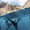 National Geographic dice que Juan Fernández tiene la mayor cantidad de peces en Chile