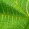 La Nasa analizará la fotosíntesis de las plantas desde el espacio