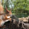 """Cómo la """"huella humana"""" limita los movimientos de los animales en todo el mundo"""