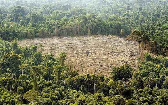 Chile desarrollo sustentable descubren que los bosques for Investigacion de arboles
