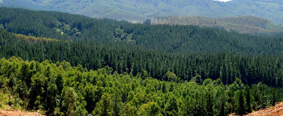 bosques-concentracion14