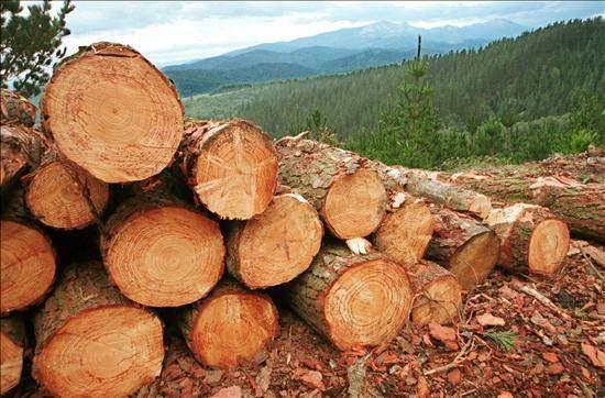 Chile desarrollo sustentable mayor a de la madera talada for La veta de la madera