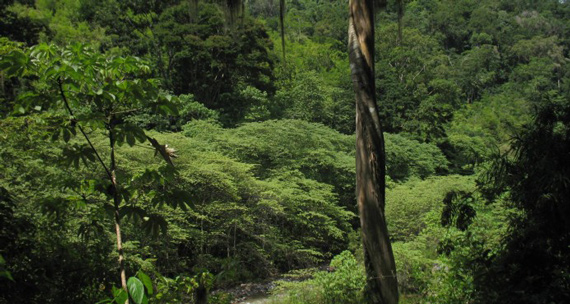 bosques-verde-1-0416