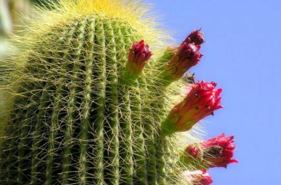 cactus-0416
