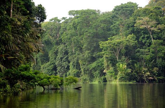 bosques-secundarios-0516