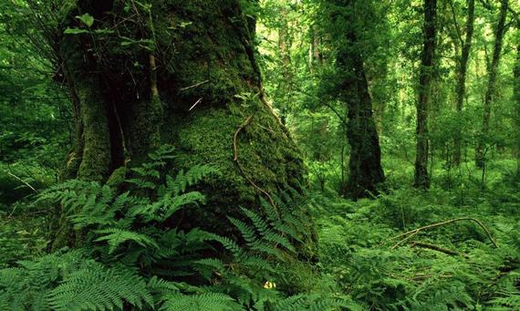 bosques-verdes-0416
