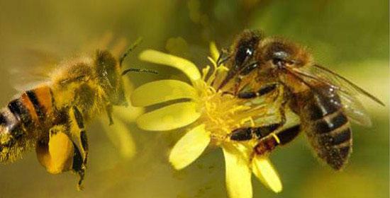 abejas-en-flor-14