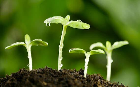 agricultura-sustentable-0716