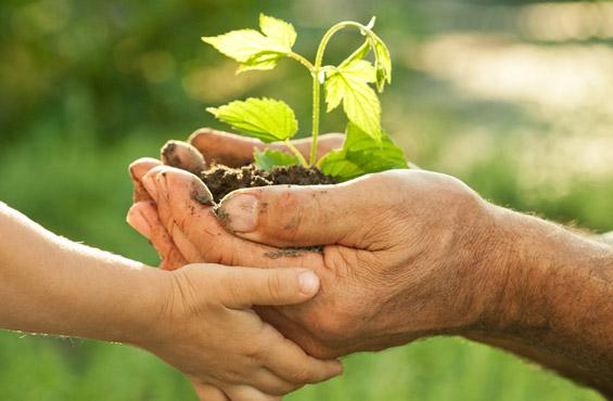 desarrollo-sostenible-7-15