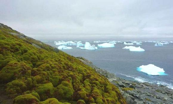Antartica-CC-1-0517