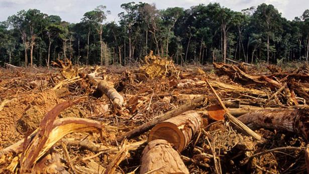 Las principales causas de la deforestación en el mundo | Chile Desarrollo  Sustentable